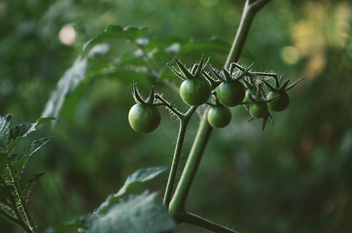 Untitled by kristin~mainemomma
