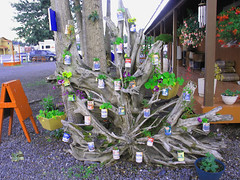 can tree in valdez July 2011 (Judi P45) Tags: photo gallery first cannon g6 my