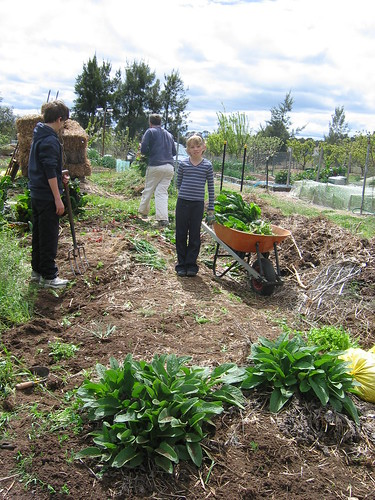 Preparing the bed for potatoes 2011