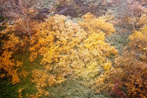 秋から冬の色へ