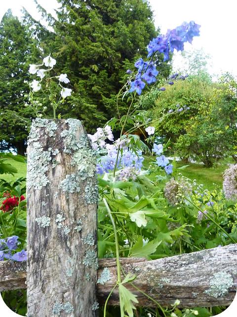Trapp Gardens