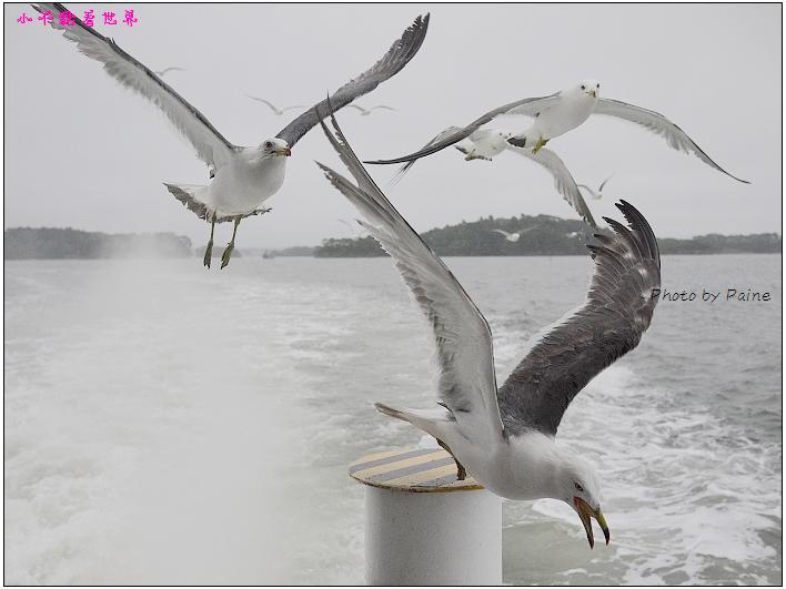 仙台松島遊船餵海鷗-25.jpg