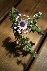 flowers1 (heathergm) Tags: flowers macro lavender africandaisy thyme