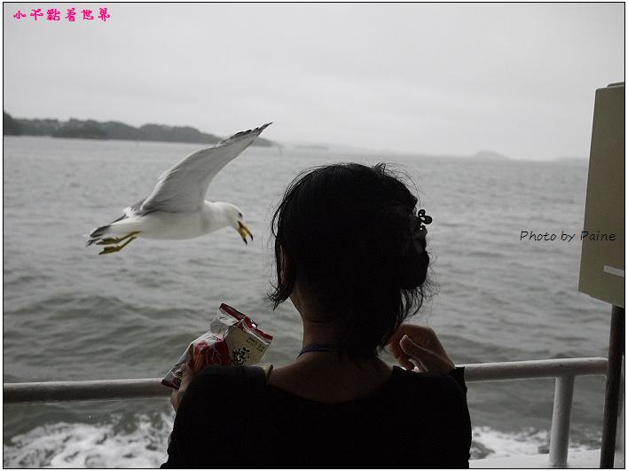 仙台松島遊船餵海鷗-19.jpg