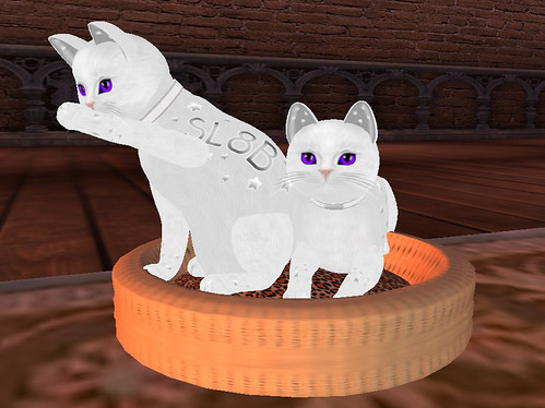 SecondLife KittyCatS