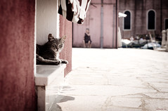 Burano cat (nerdmeister®) Tags: street venice lagune cat island chat dorf village lagoon gato oldwoman neko venezia gatto venedig burano kathe catspotting
