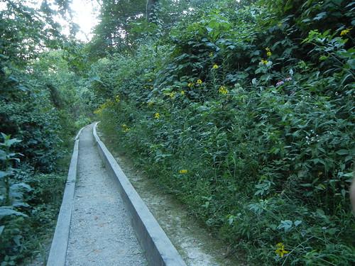 July 9 2011 Roubidoux Spring Walkway