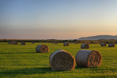 big bales in Castletown. Calf of Man in background (peddyrmac) Tags: sunset photo hay bales isleofman peddyrmac petermcevoy peddyrplant