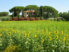 Summer in Tuscany (V-rider) Tags: sea italy bike bicycle mediterranean tour anniversary july sunflowers tuscany med grosseto orbetello talamone vbt 2011 rhm grosetto vrider laparrina italy2011