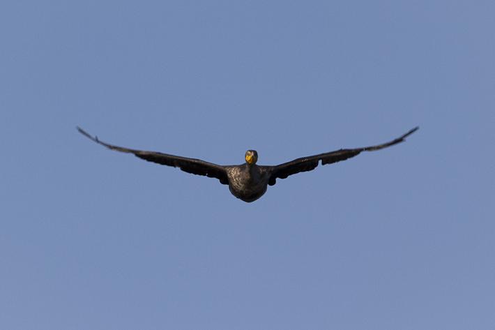 071411_bird05