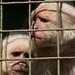 White Capuchin (1)