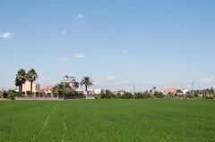 321/365 Los arrozales valencianos
