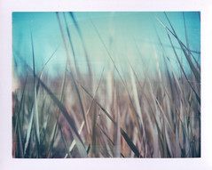(jeffreywithtwof's) Tags: summer film jeff grass closeup polaroid remember dunes cant attachment instant hutton expired 440 seagrass landcamera packfilm peelapart jeffhutton jeffhuttonphotography thismightbe669 jeffreyhutton