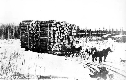 white pine logging in Northern MN around the turn of the century.