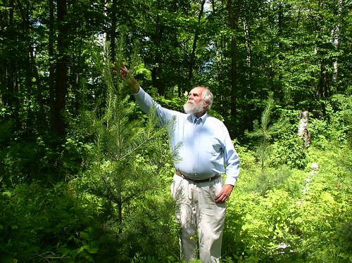 Rieber Paulson monitoring the growth on a 5-year old white pine.
