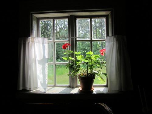 Kukka ikkunalla by Anna Amnell