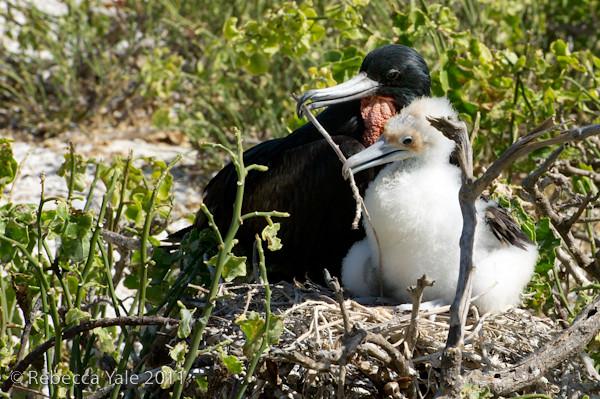 RYALE_Galapagos-180