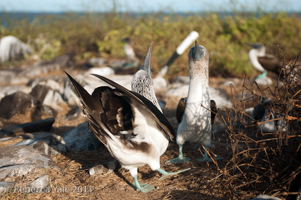 RYALE_Galapagos-118
