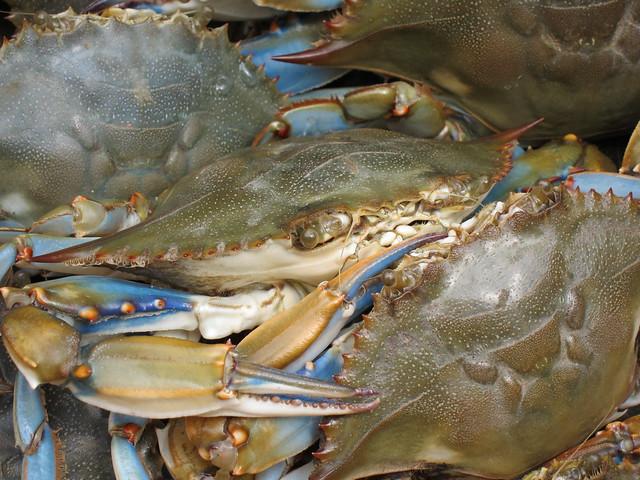 Crabbing et al 030