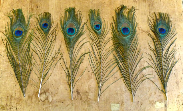 Feathers in a Row