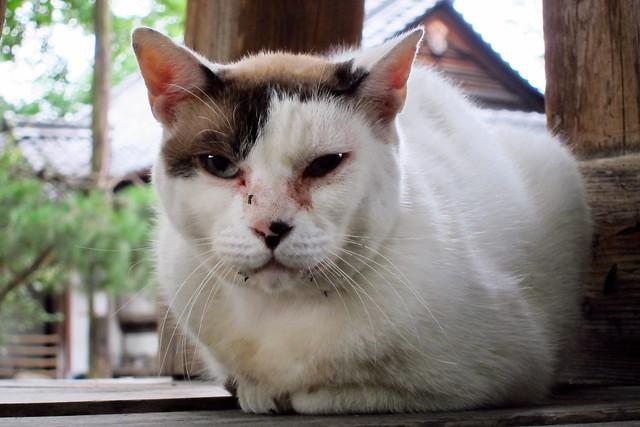Today's Cat@2011-07-28