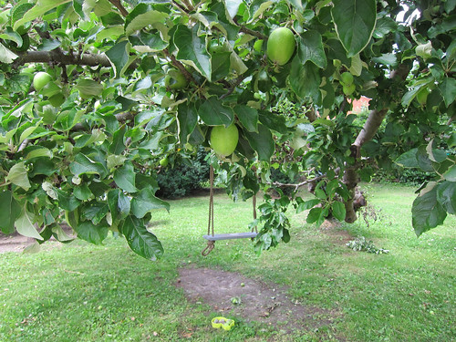 Apple Tree Swing