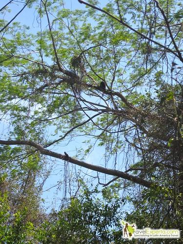 Ometepe Island Nicaragua Nature Hike Family Adventure Howler Monkeys