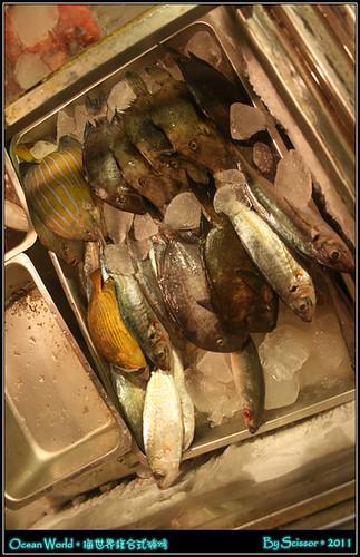豐富的魚群