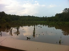 Swamp - Upper Deck