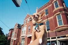 Louisville Floyd (EllenJo) Tags: travel summer vacation dog chihuahua building 35mm lomo kentucky ky july roadtrip louisville floyd 2011 july29 1ststreet oldlouisville cheapplasticcamera greetingsfromfloydstreet ellenjo greetingsfromfloydst ellenjoroberts july2011 travelwithpets floydstreet travelingchihuahua floydthechihuahua roadtripwithmommaandfloyd greetingsfromfloydstreet2011 gffs2011