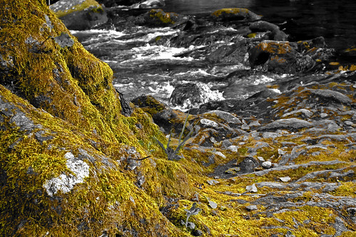 DSCF0282 (Splendor in the moss) by i_real_es