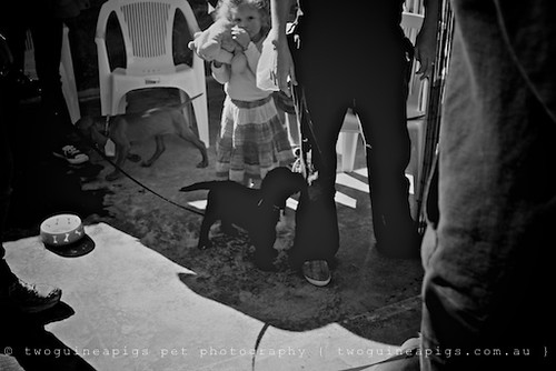Kids socialising with puppies by twoguineapigs pet photography