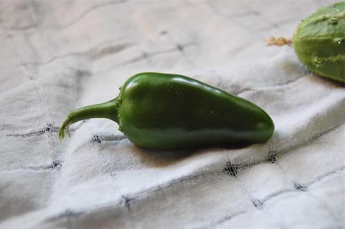 jalapeno pepper organic garden