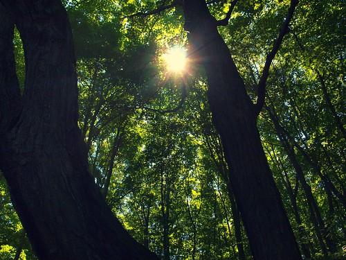 フリー写真素材, 自然・風景, 森林, 樹木, 日光・太陽光線, カナダ,