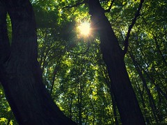 [フリー画像] 自然・風景, 森林, 樹木, 日光・太陽光線, カナダ, 201108081900