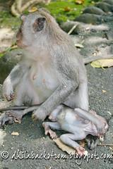 Indonesia_2011-70.jpg