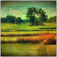 Rural Northeast Thailand Landscape (ulli_p) Tags: travel blue sky painterly tree green art texture nature colors beautiful clouds rural landscape thailand colorful asia southeastasia colours rice best palmtree udonthani textured cloudysky isan motat travelphotography likeapainting artisticexpression amazingcolours aworkofart riceseedlings flickraward texturedphoto ruralthailand canoneos450d imagesofharmony earthasia awardtree bestflickrphotography totallythailand artofimages magicunicornverybest magicunicornmasterpiece