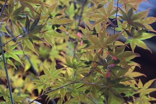 きらきらと / Fresh  leaves