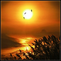 Golden flight! (adrians_art) Tags: red mist birds yellow fog sunrise reflections reeds wings flight silhouettes rivers