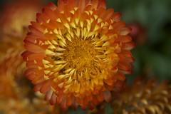 (IanAWood) Tags: summer kewgardens london kew raw richmond royalbotanicalgardens 105mmf28gvrmicro d3x nikkor105mmf28gvrmicro walkingwithmynikon