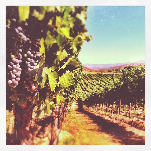 Sunday funday #tem2011 #temecula #winery #grapes #vineyard