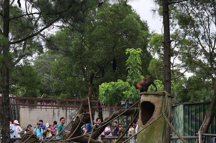 六福村動物園018