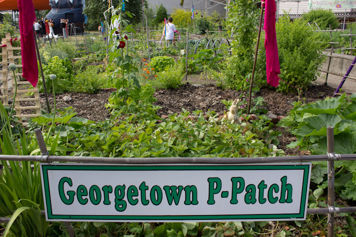 georgetown p-patch.
