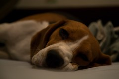 317 (-5Nap-) Tags: friends dog beagle moscow gamine gayka