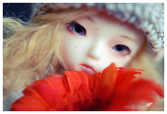 194 day of 2011 (Besia-natka) Tags: flower nikon mod doll mari bjd 365 dollfie d60 pudica pudi pipos po11 dreamingmari