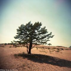 Sand dune tree (- Man from the North -) Tags: summer tree beach analog finland holga sand dune toycamera expiredfilm