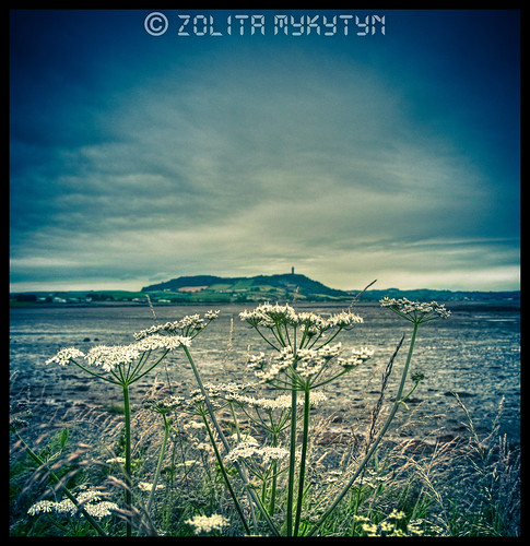 Cowslip and Scrabo by xxx zos xxx