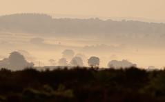 trees in mist (devonteg) Tags: trees mist dawn nikon july exmoor 70300 2011 d80 haddonhill devontegsignsofsummerassignment