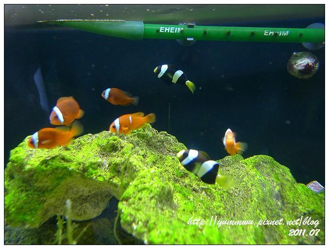 110711小丑魚主題館 (42)