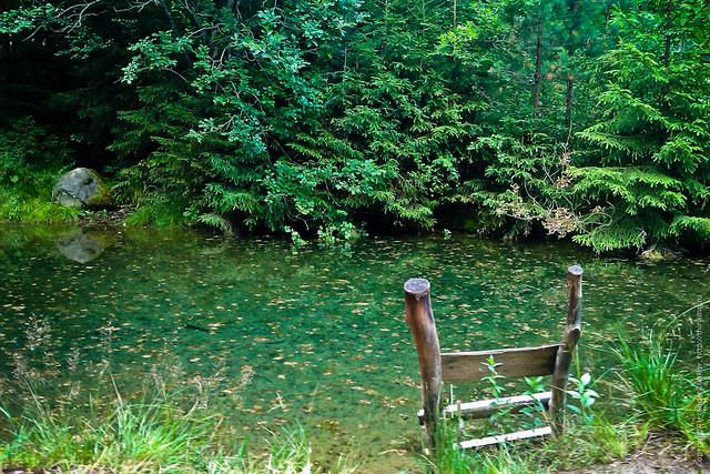 Лесной пруд